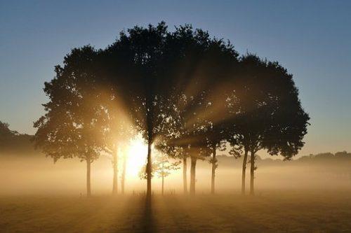 trees-1657824__340
