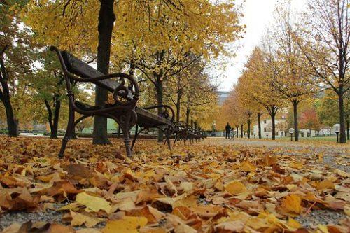 autumn-2078444__340