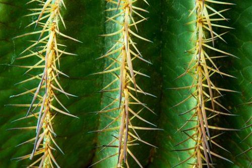 cactus-370258__340