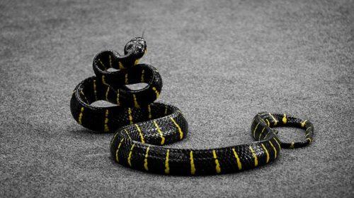 snake-1543058__340