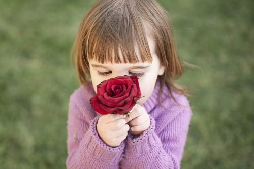 rose-1963807_960_720