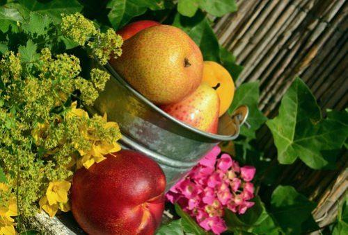 fruits-850491__340