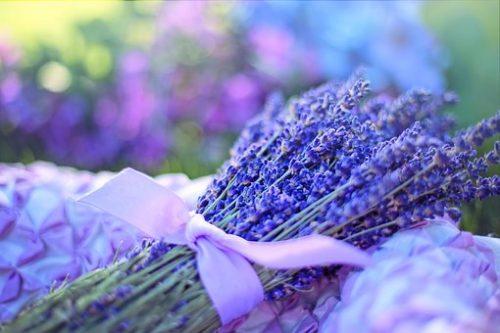 lavender-2482374__340