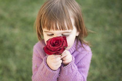 rose-1963807__340