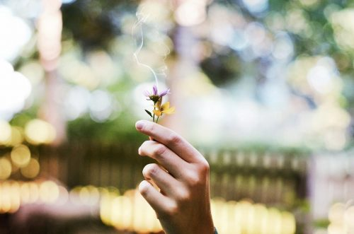 flower-1210067_960_720