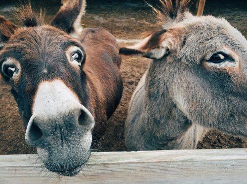 donkey-1725230_960_720